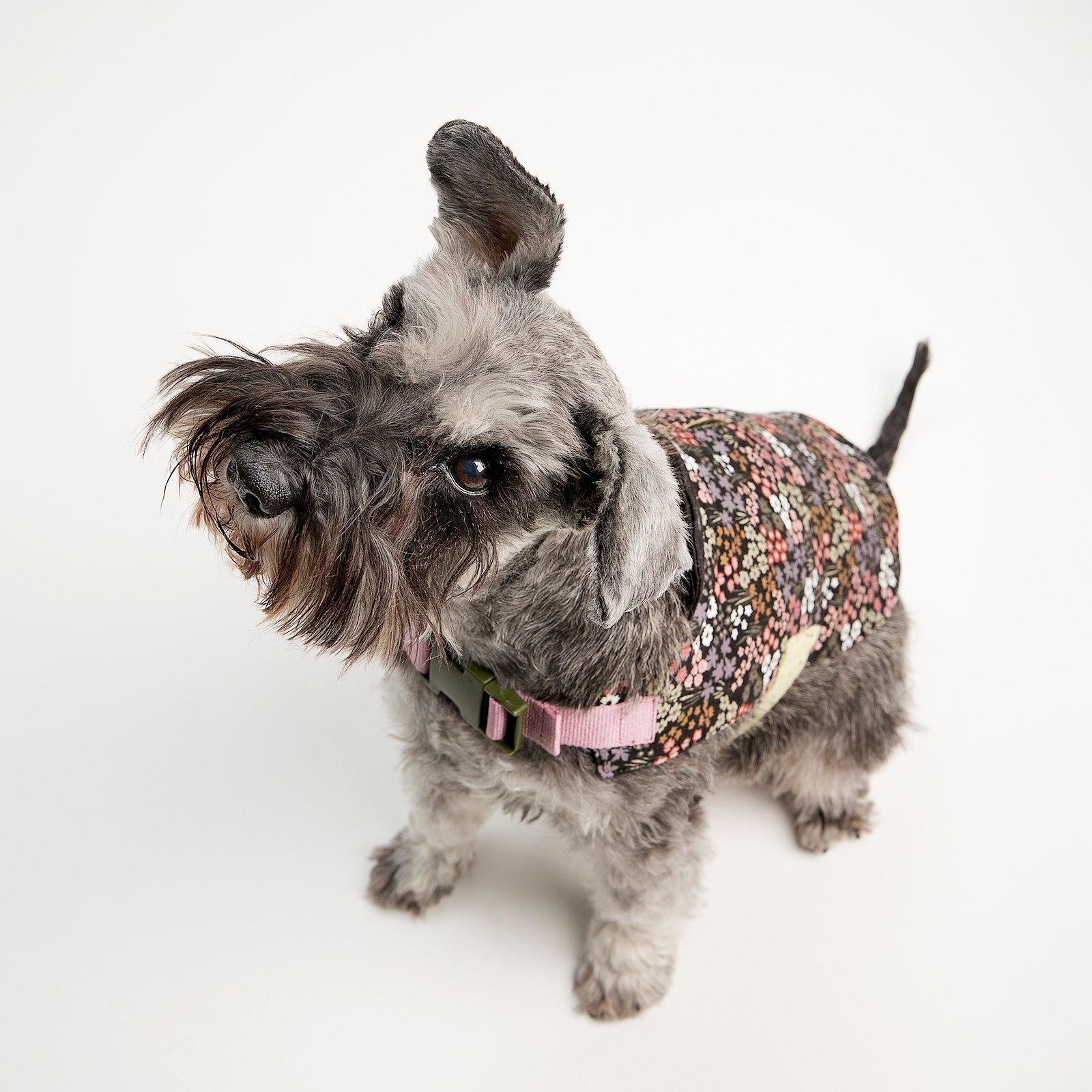 Dog coat p90346_920238_22303_45200_45204_sskit